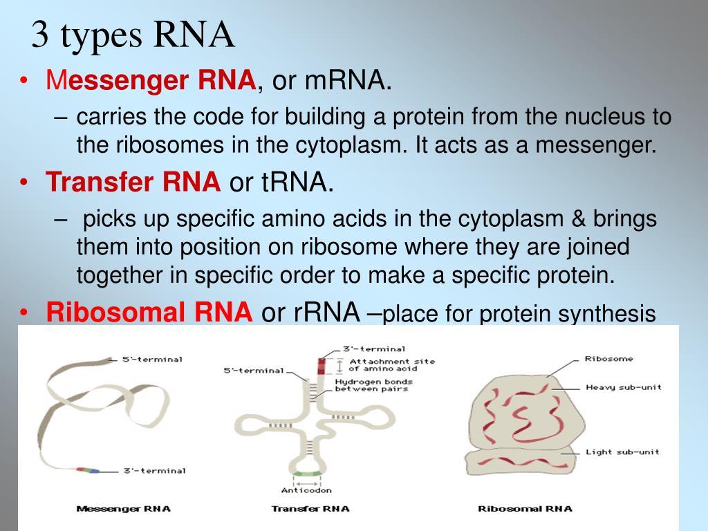 3 types RNA