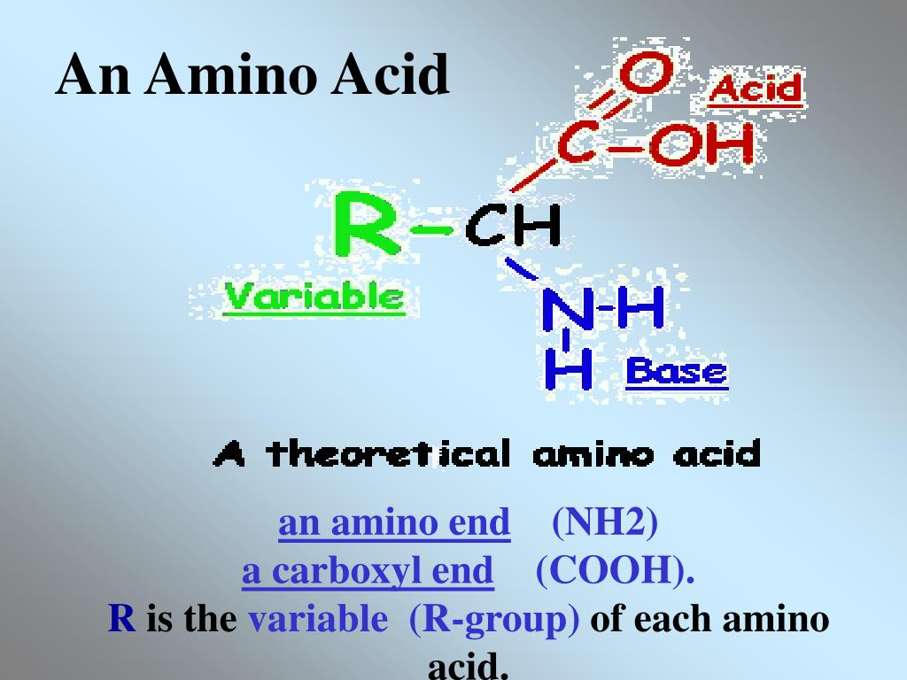An Amino Acid