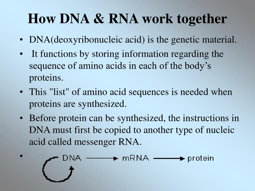 How DNA & RNA work together