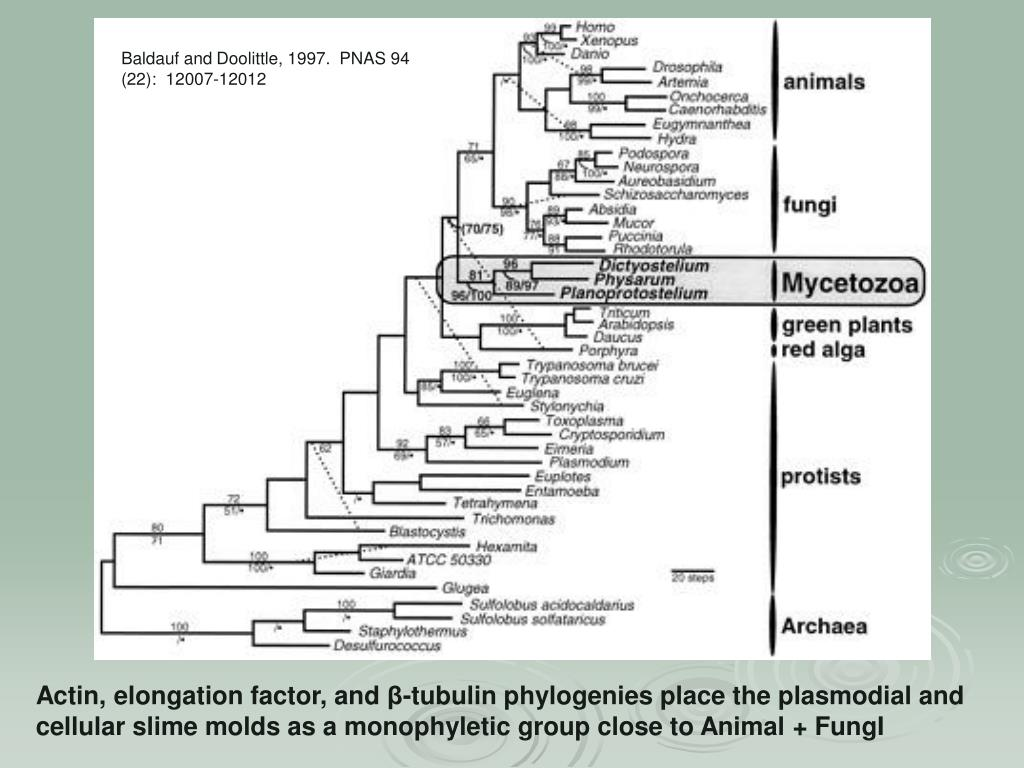 Baldauf and Doolittle, 1997.  PNAS 94 (22):  12007-12012