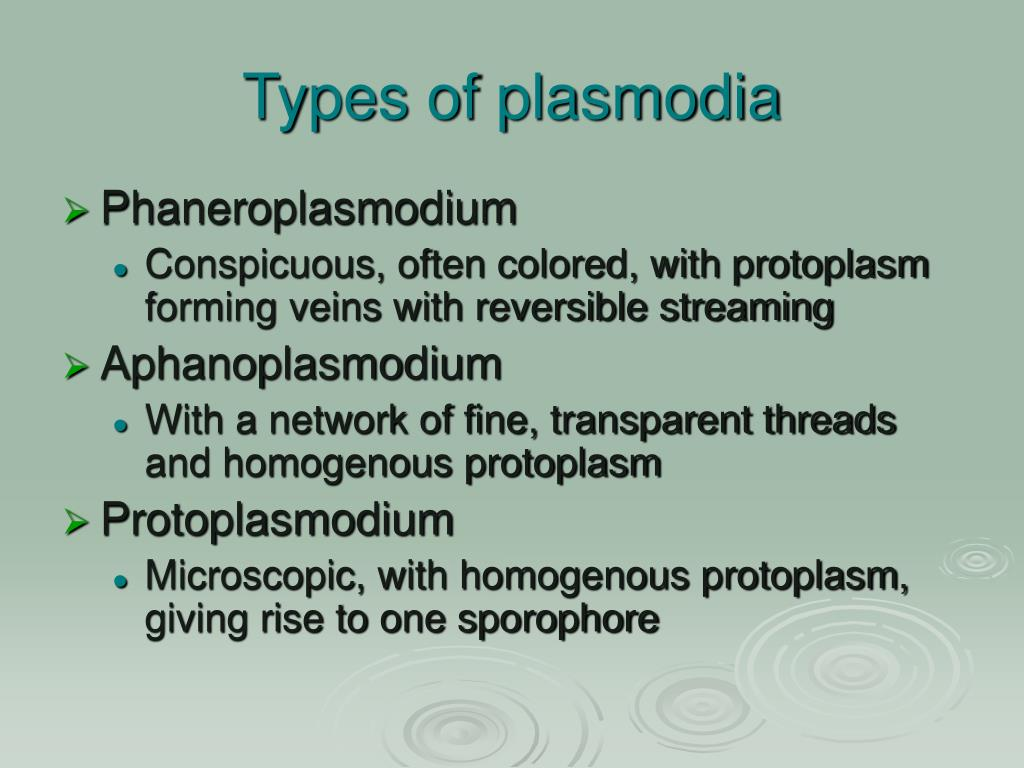 Types of plasmodia