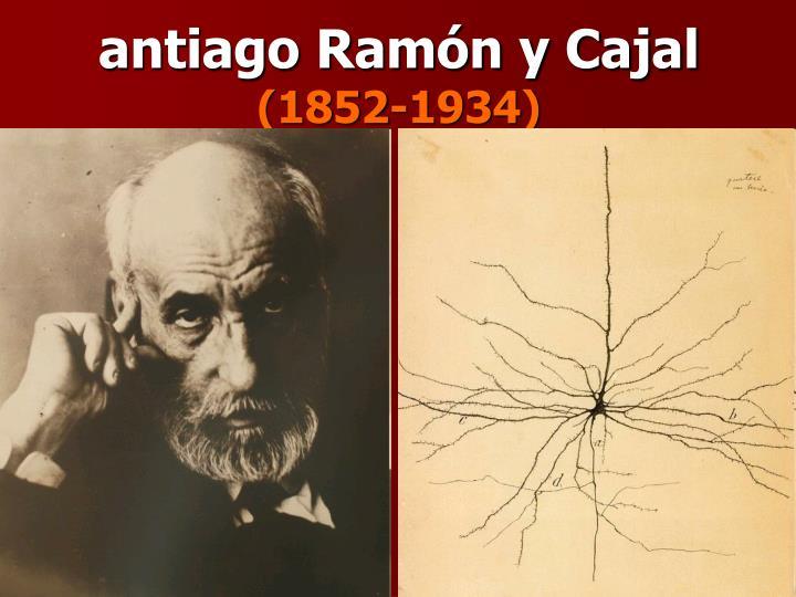 antiago Ramón y Cajal