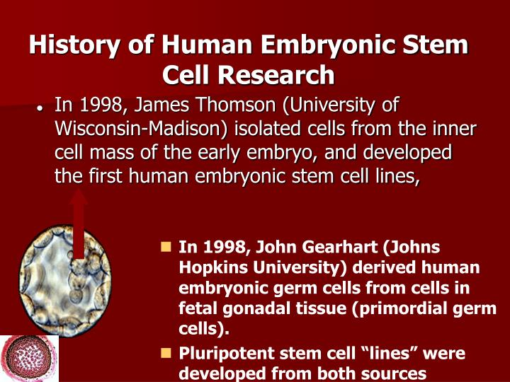 human embryonic stem cell research essay John carroll university carroll collected senior honors projects theses, essays, and senior honors projects spring 2016 human embryonic stem cell research vs.