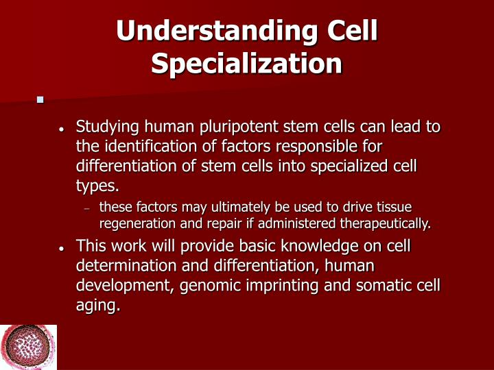 Understanding Cell Specialization