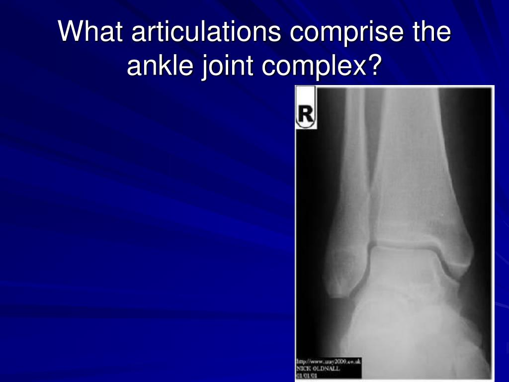 What articulations comprise the ankle joint complex?