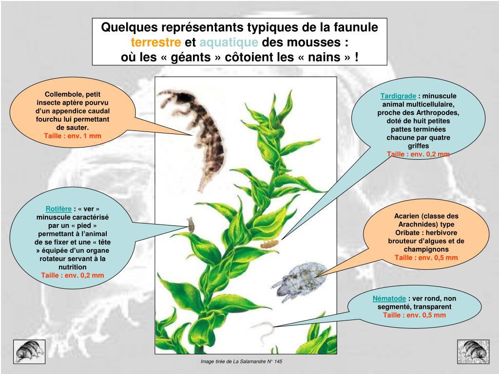 Image tirée de La Salamandre N° 145