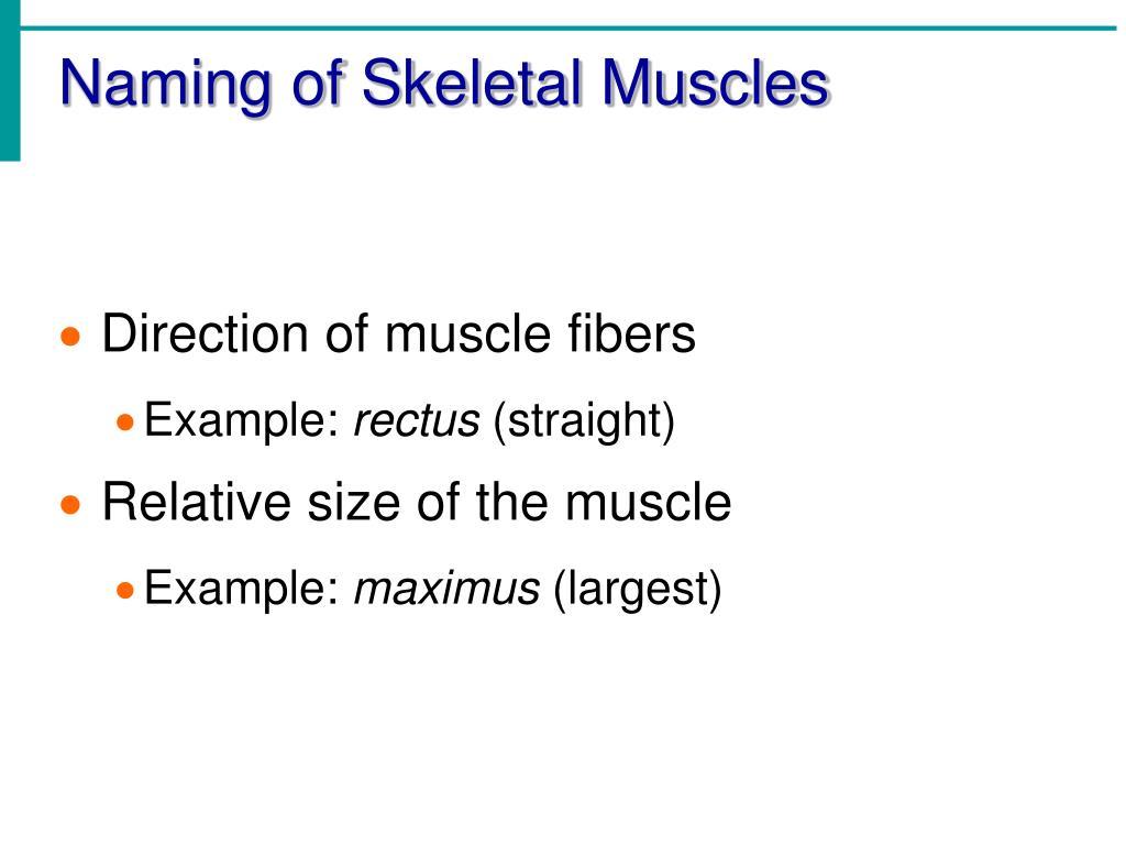 Naming of Skeletal Muscles