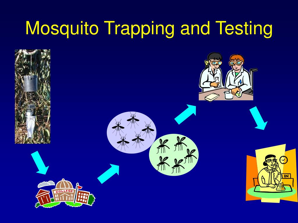 Mosquito Trapping and Testing