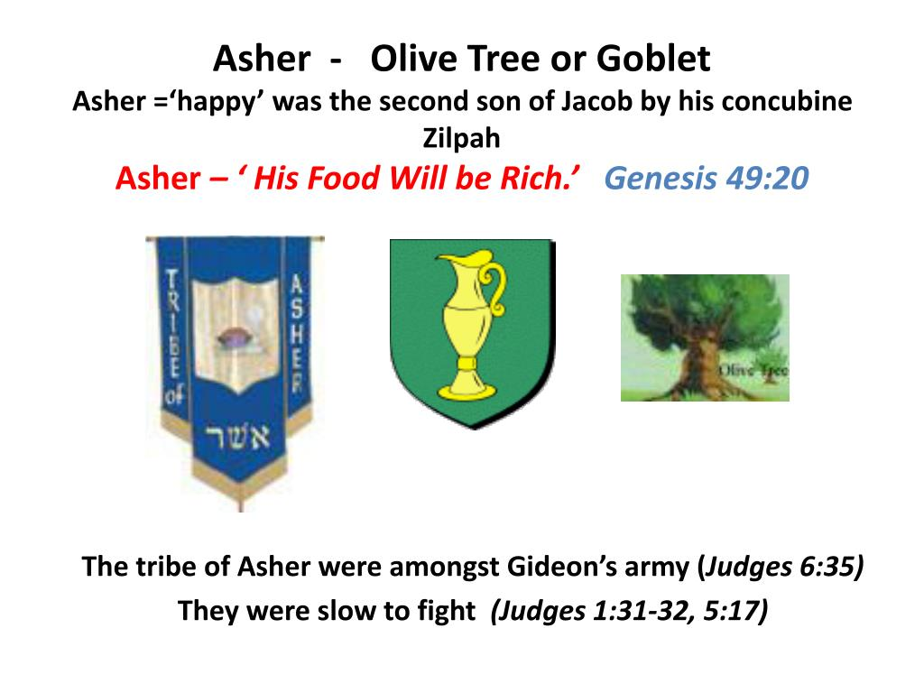 Asher  -   Olive Tree or Goblet