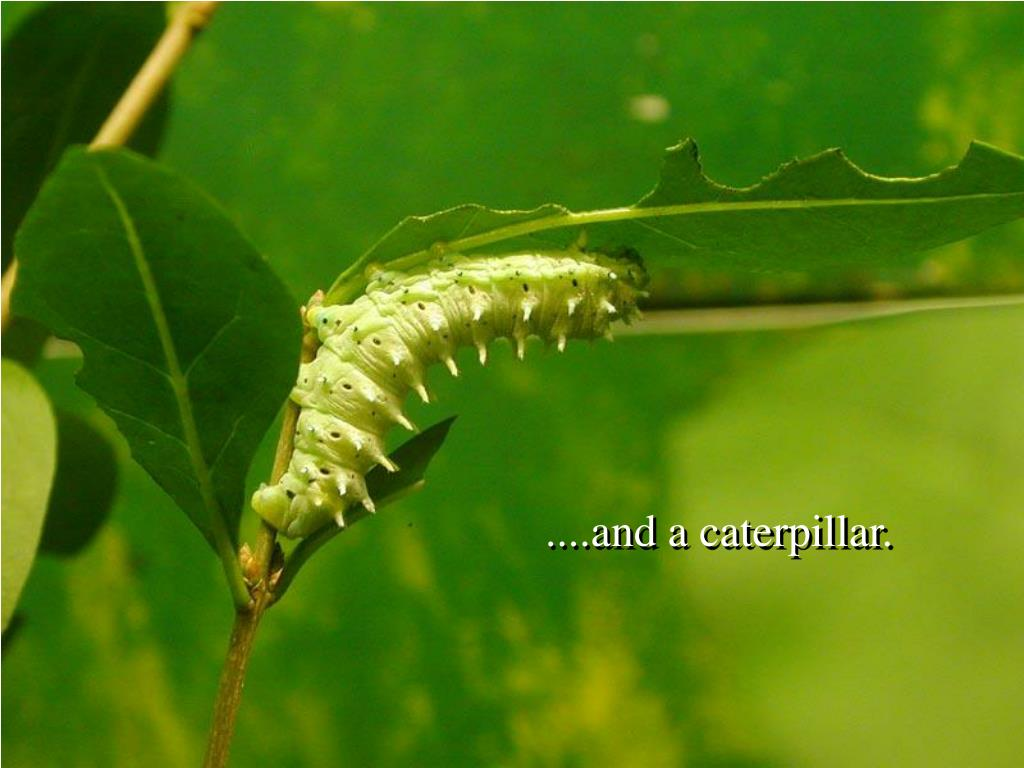 ....and a caterpillar.