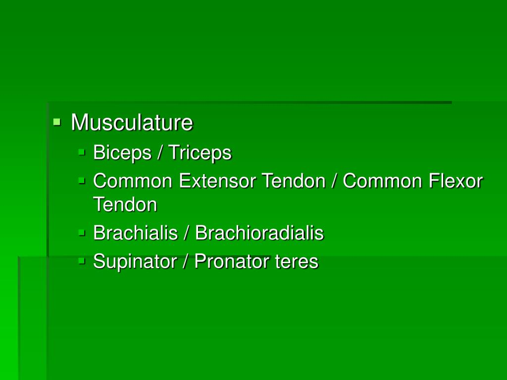 Musculature