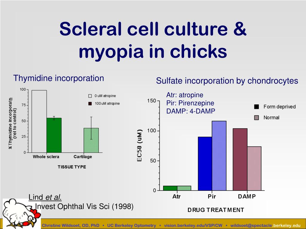 Scleral cell culture & myopia in chicks