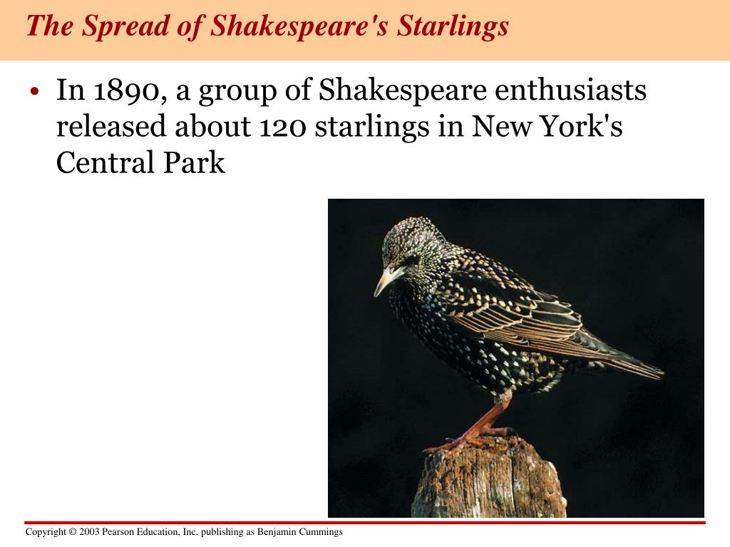 The Spread of Shakespeare's Starlings