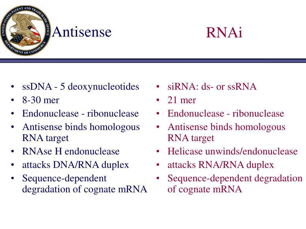 ssDNA - 5 deoxynucleotides