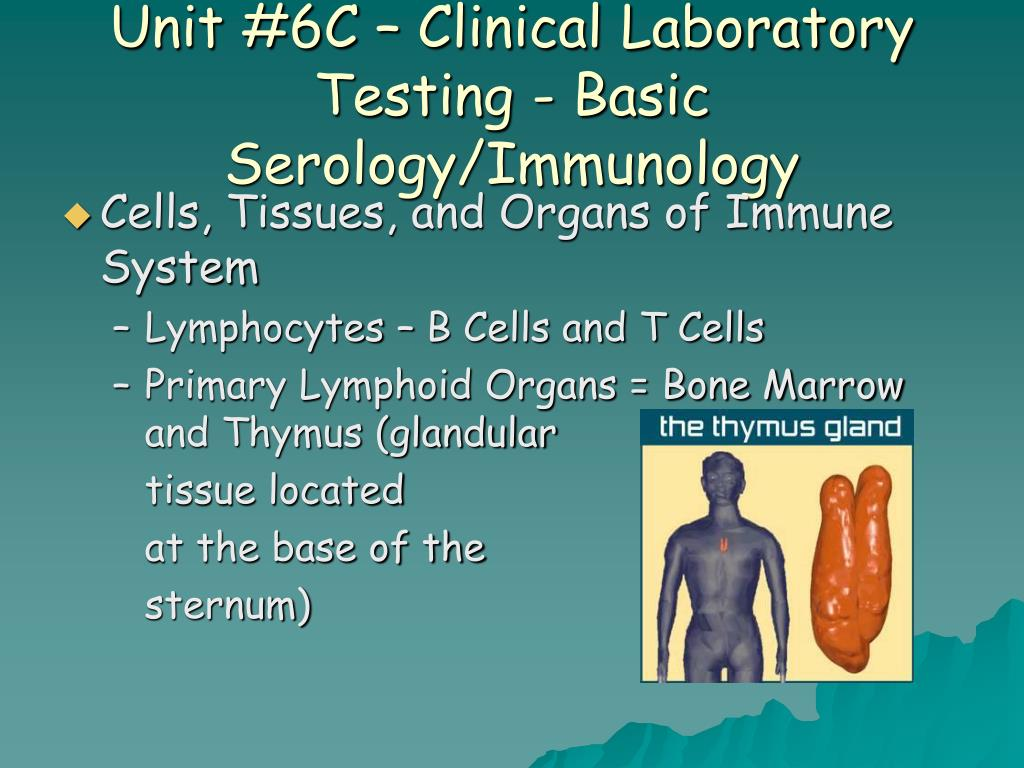 Unit #6C – Clinical Laboratory Testing - Basic Serology/Immunology