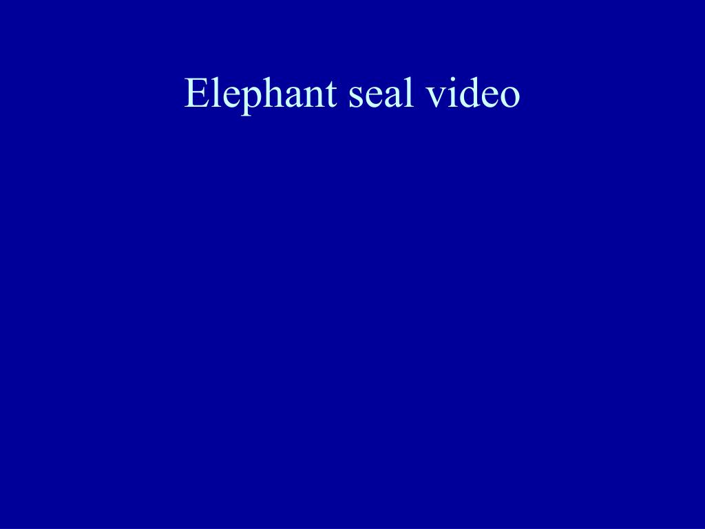 Elephant seal video