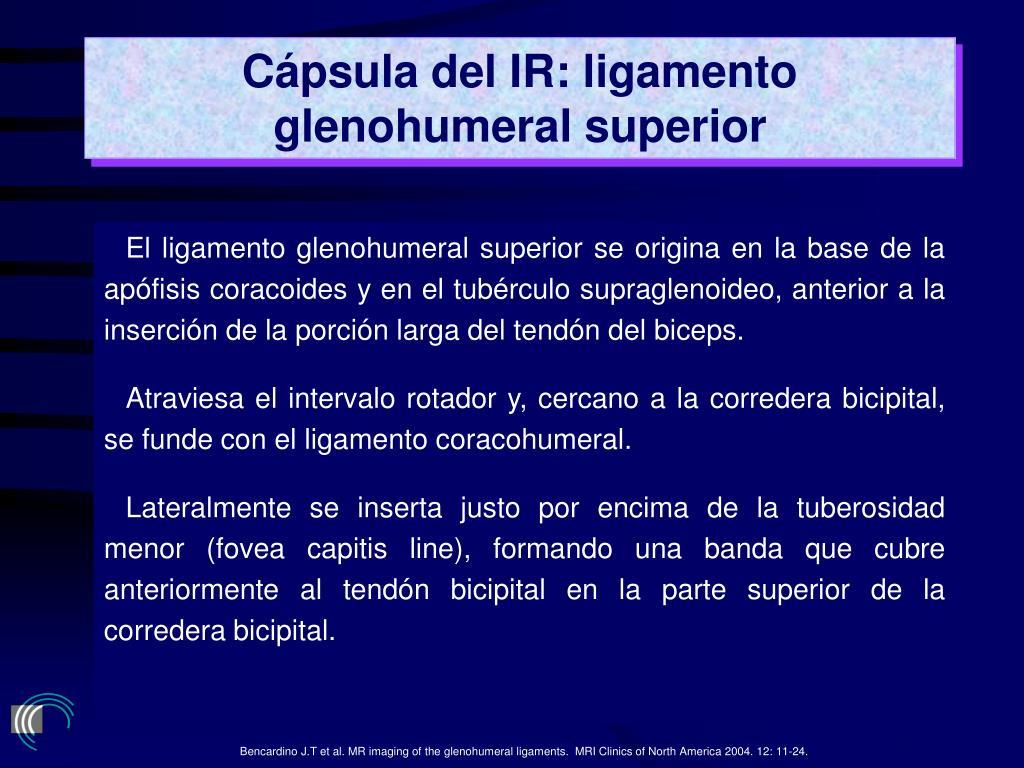 Cápsula del IR: ligamento glenohumeral superior