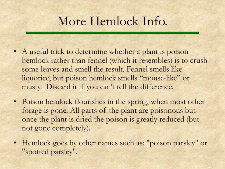 More Hemlock Info.