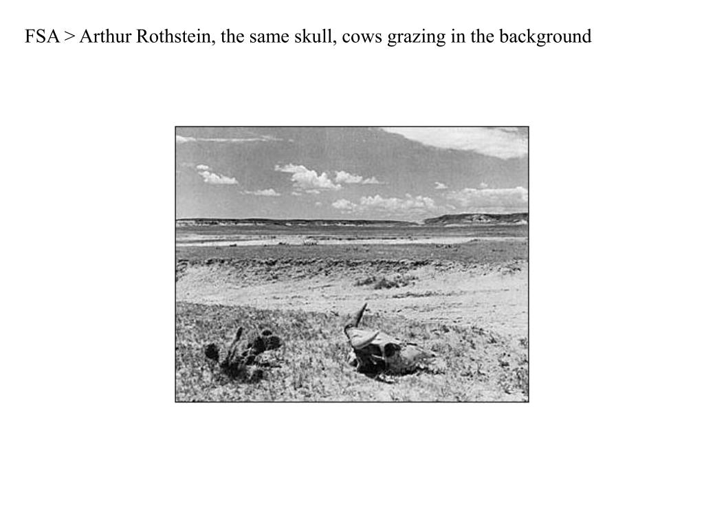 FSA > Arthur Rothstein, the same skull, cows grazing in the background