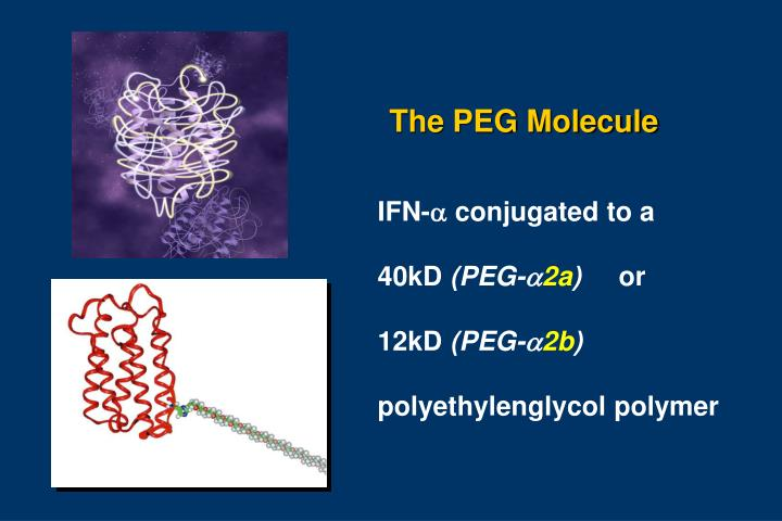The peg molecule