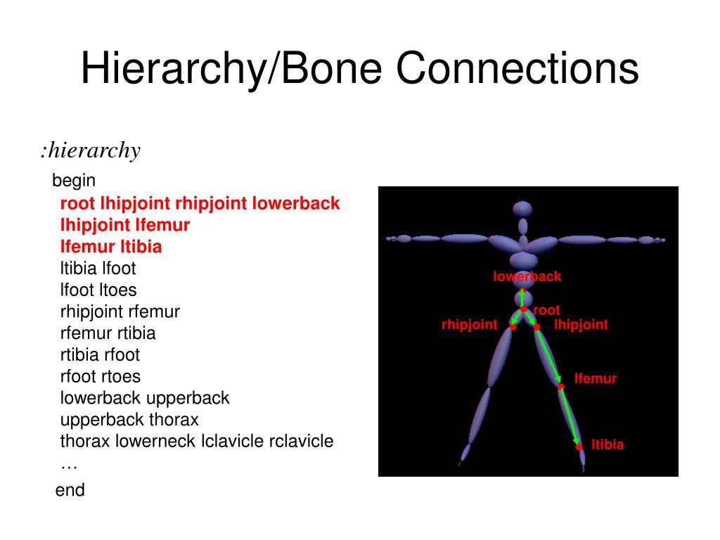 Hierarchy/Bone Connections