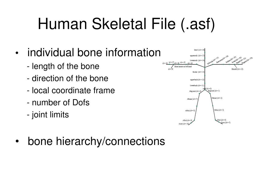 Human Skeletal File (.asf)