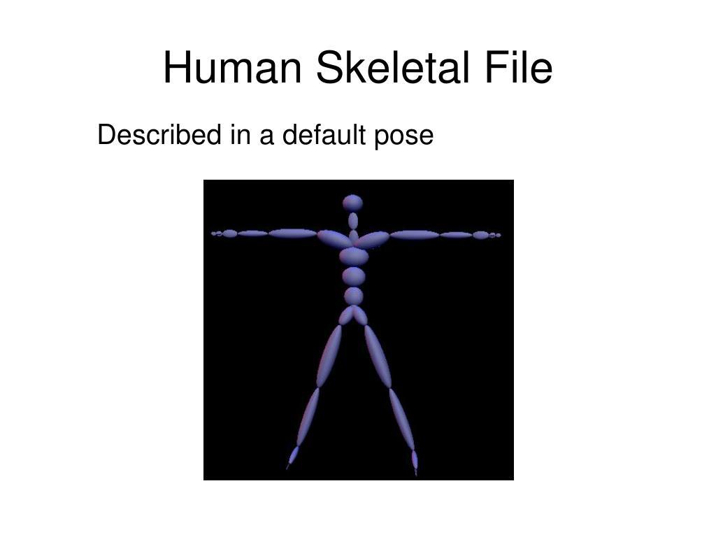 Human Skeletal File