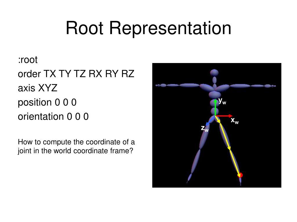 Root Representation