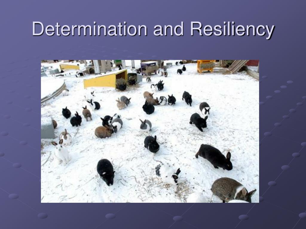 Determination and Resiliency