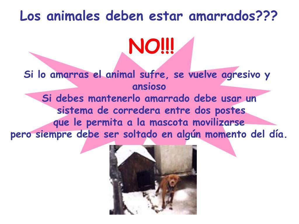 Los animales deben estar amarrados???
