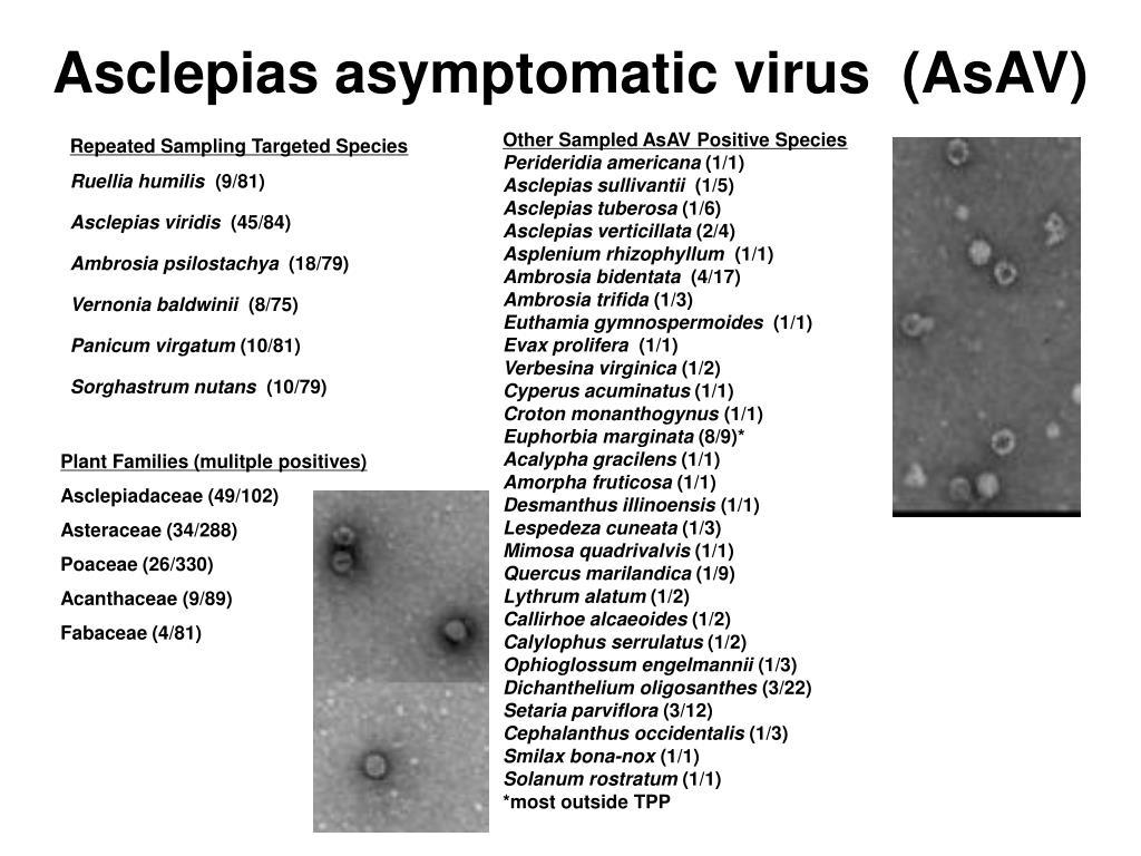 Asclepias asymptomatic virus  (AsAV)