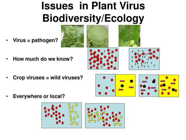 Issues in plant virus biodiversity ecology