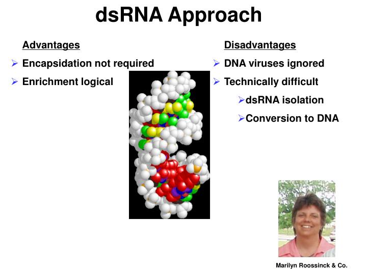 DsRNA Approach