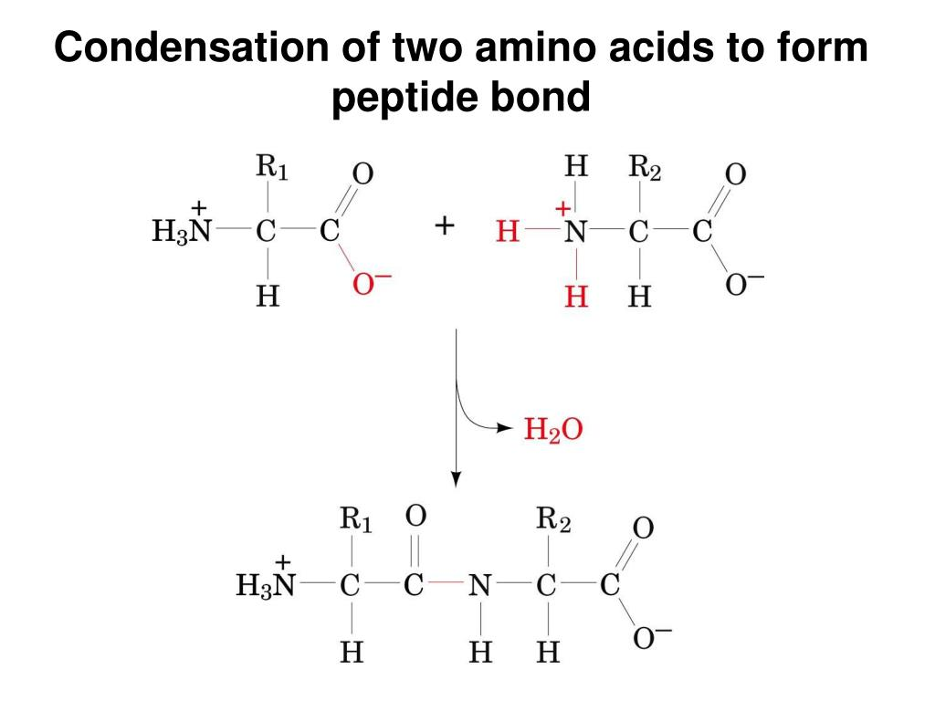 formation of amides The formation of amide linkages from carboxylic acid derivatives and amines constitutes a fundamental process in organic chemistry that is of high utility in the.