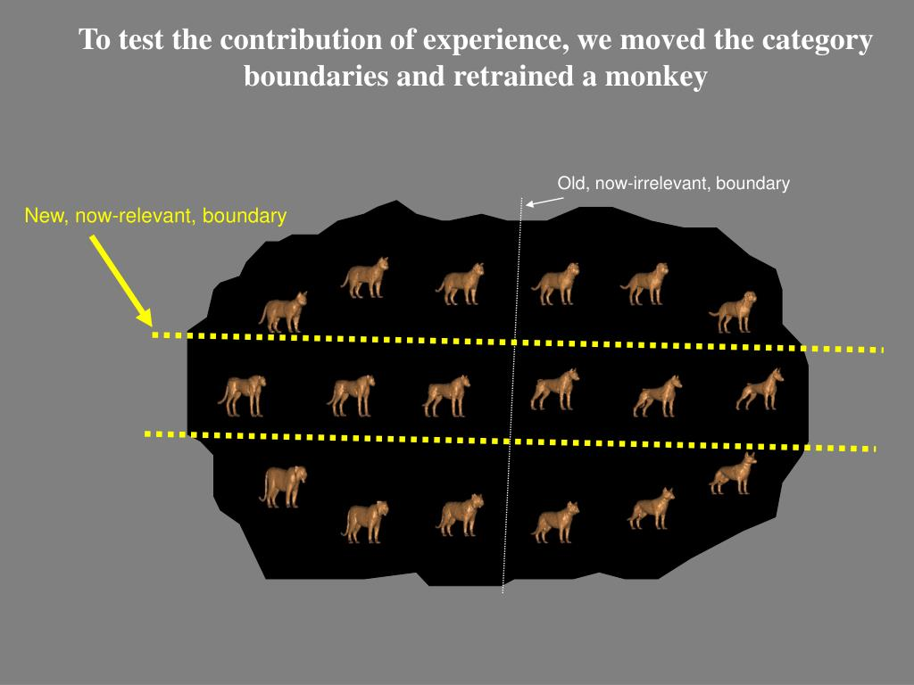 To test the contribution of experience, we moved the category boundaries and retrained a monkey