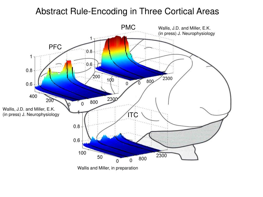 Abstract Rule-Encoding in Three Cortical Areas