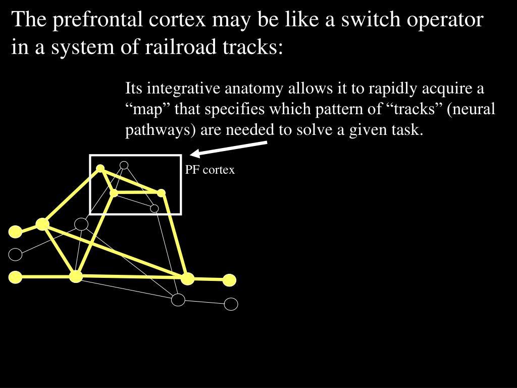PF cortex