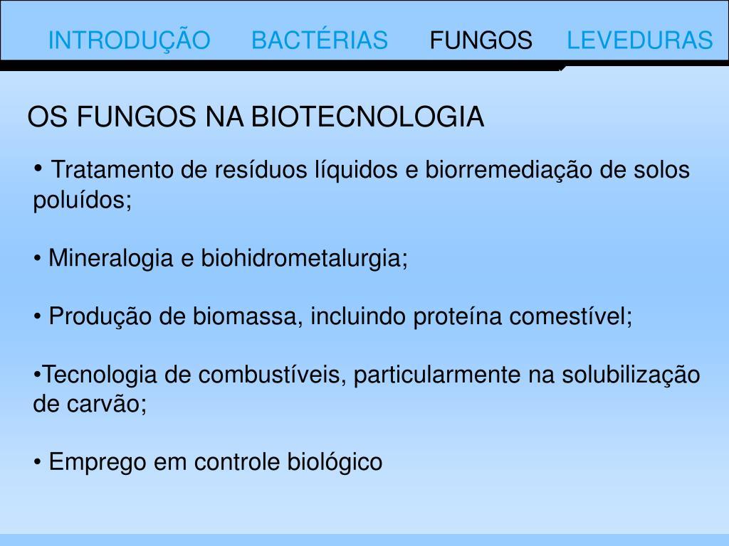 OS FUNGOS NA BIOTECNOLOGIA