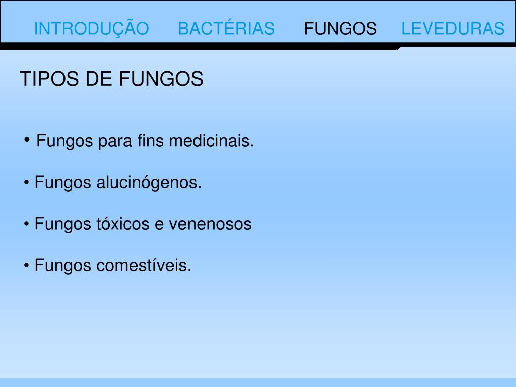 TIPOS DE FUNGOS