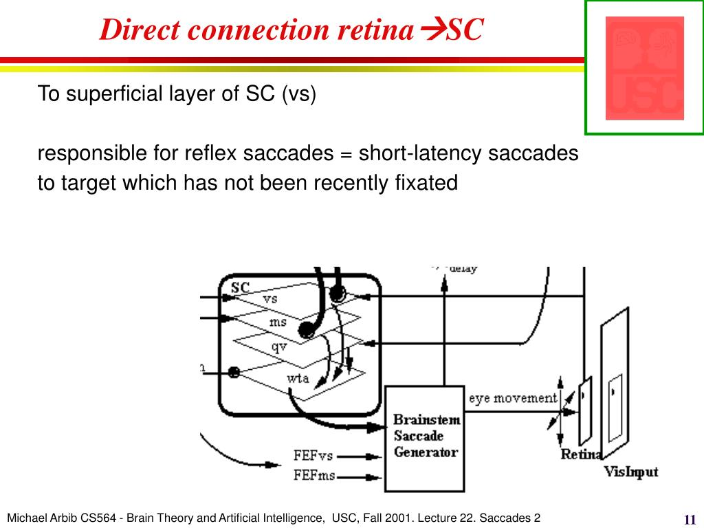 Direct connection retina