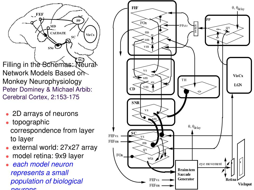 Filling in the Schemas: Neural Network Models Based on Monkey Neurophysiology
