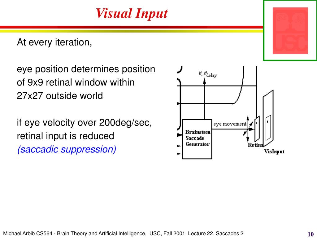 Visual Input