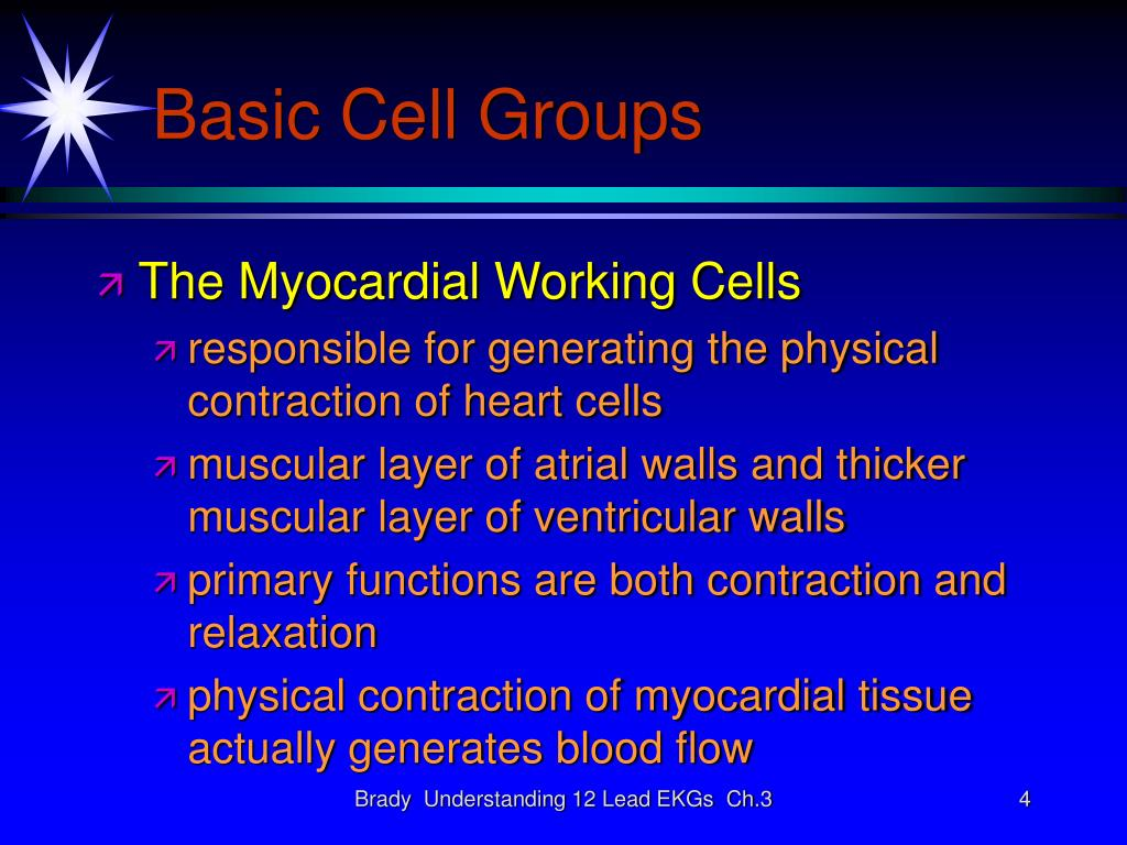 Basic Cell Groups