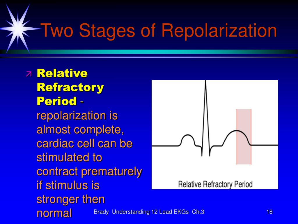 Two Stages of Repolarization