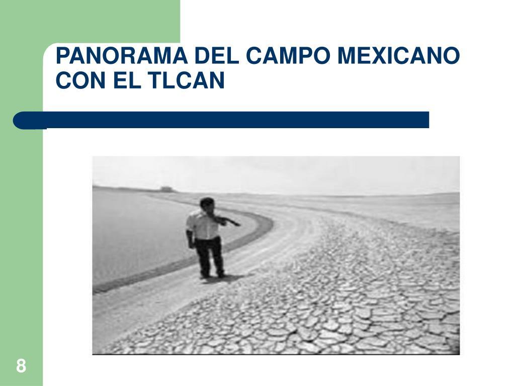 PANORAMA DEL CAMPO MEXICANO CON EL TLCAN