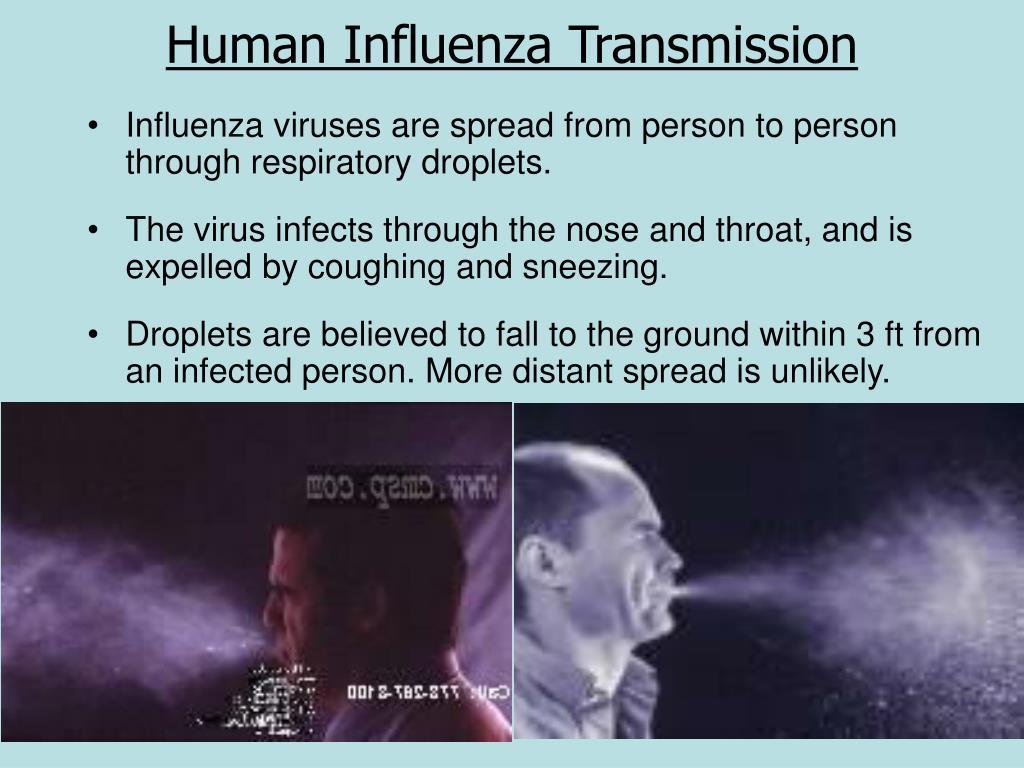 Human Influenza Transmission