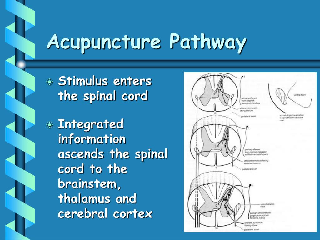 Acupuncture Pathway
