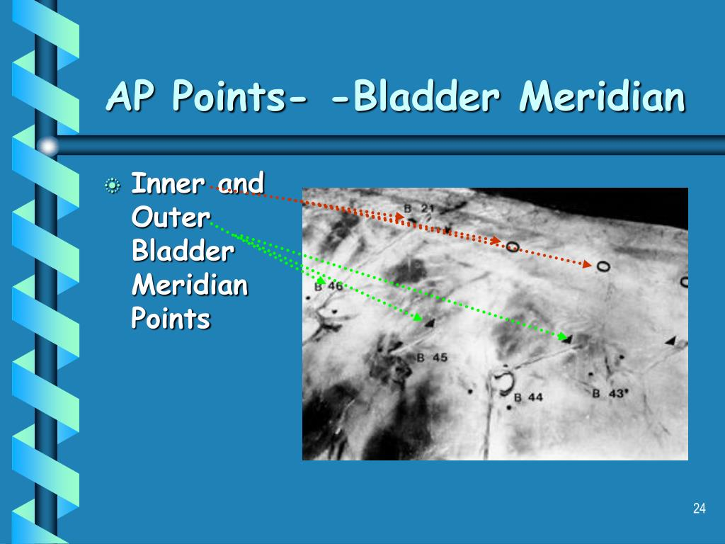 AP Points- -Bladder Meridian