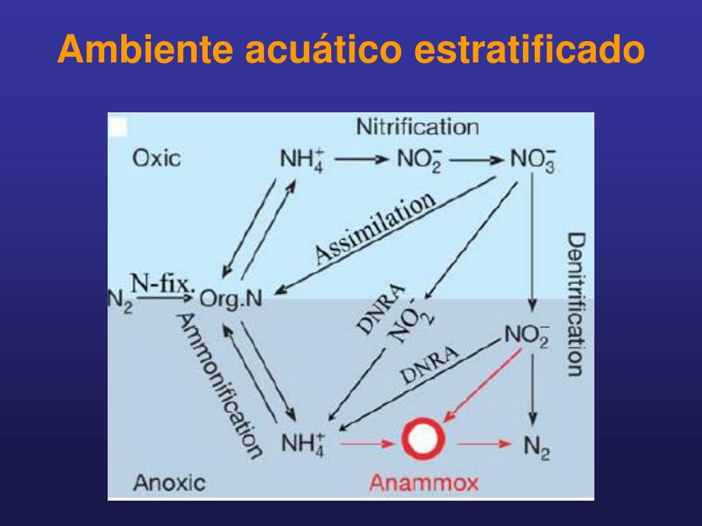 Ambiente acuático estratificado