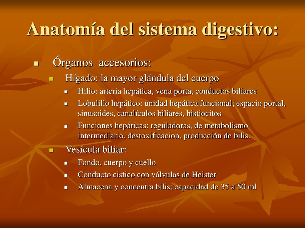 Anatomía del sistema digestivo: